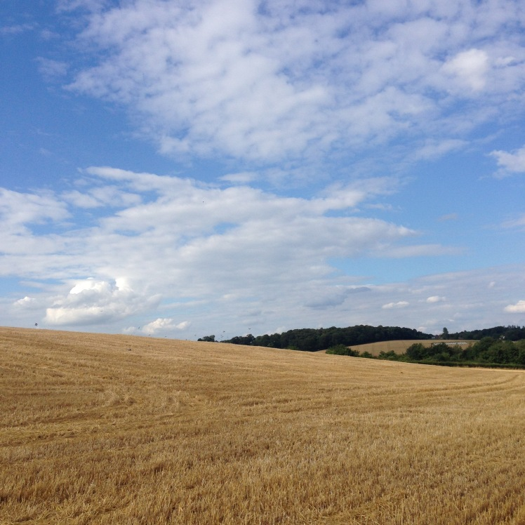Country walk 30 July 2016_2